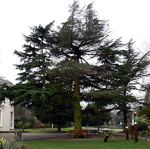 Kings Heath Park - Image: A tree