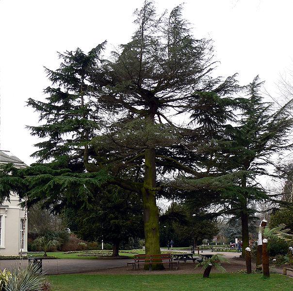 File:A tree.jpg