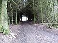 A tree tunnel - geograph.org.uk - 1177409.jpg
