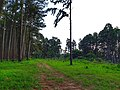 A walk with nature1.jpg
