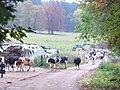 Abendviehscheid, Brunnenhof - geo.hlipp.de - 6711.jpg