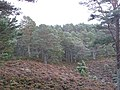 Abernethy Forest - geograph.org.uk - 612775.jpg