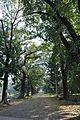 Acharya Jagadish Chandra Bose Indian Botanic Garden - Howrah 2011-01-08 9828.JPG