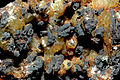 Adamite sur goethite1 (Maroc).jpg