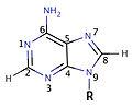 Adenine 9-substituted.jpg