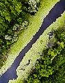 Aerial image of Acarlar floodplain forest 1.jpg