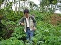 Alfredo Ruiz Saire Agricultor Cadmalquino.JPG