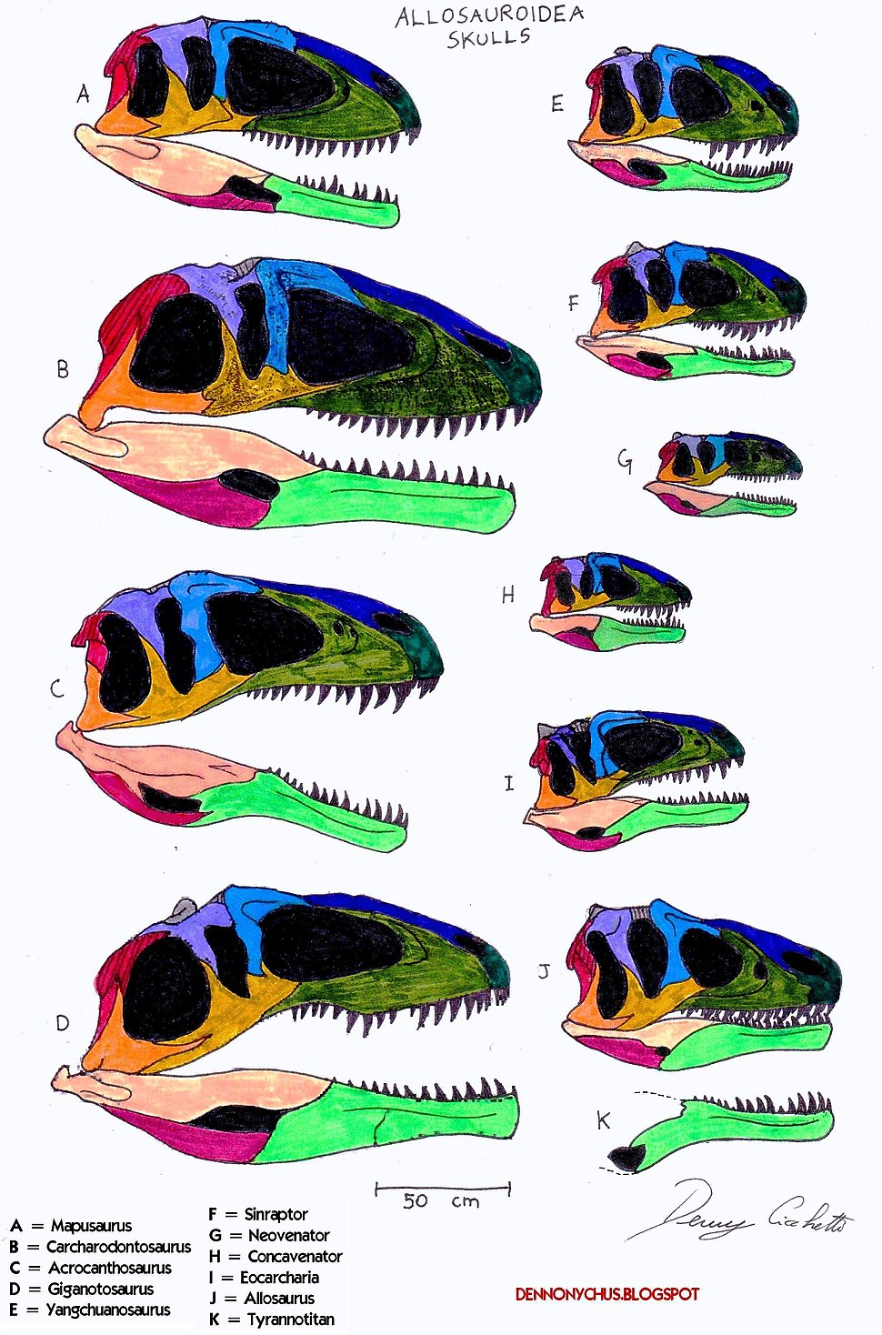 Allosauroidea skull comparison