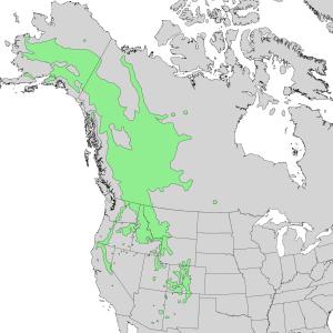 Alnus incana - Image: Alnus incana ssp tenuifolia range map 1