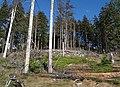 Altkoenig-JR-G6-4892-2011-06-14.jpg