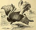 Animal locomotion, or Walking, swimming, and flying, with a dissertation on aëronautics (1874) (18171309496).jpg