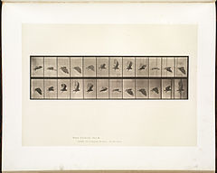Animal locomotion. Plate 766 (Boston Public Library).jpg