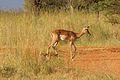 Animals at Pilanesberg National Park 18.jpg