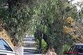 Antigua vereda. - panoramio.jpg
