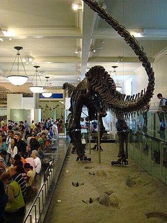File:Apatosaurus and trackway.jpg