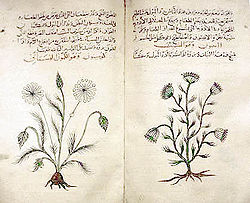 Where can I find info on herbal medicine during the Elizabethan era?