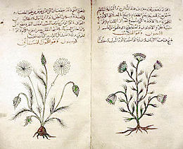 Arabic herbal medicine guidebook.jpeg