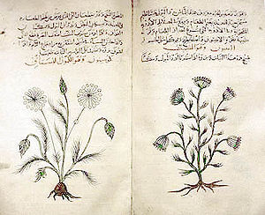 Herbal - Arabic Book of Simple Drugs (c. 1334) from Dioscorides' De Materia Medica. British Museum