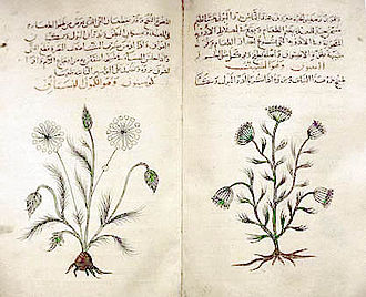 Pharmacognosy - Dioscorides' Materia Medica, c. 1334 copy in Arabic, describes medicinal features of various plants.