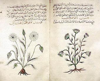 Diosc rides wikipedia la enciclopedia libre for Libros de botanica pdf