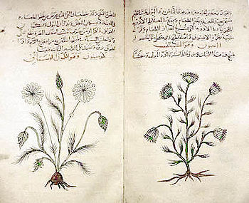Dioscorides' Materia Medica, c. 1334 copy in Arabic, describes medicinal features of cumin and dill.