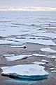 Arctic Ice (4370261777).jpg