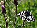Artenvielfalt im LSG Oldhorster Moor 10.jpg