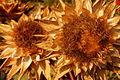 Artichoke flower (8400642768).jpg