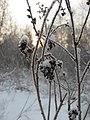 Asino, Tomskaya oblast', Russia - panoramio (4).jpg