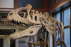Squelette fossilisé d'un cryolophosaure