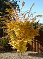 Autumn Colours - geograph.org.uk - 1027891.jpg