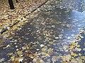 Autumn E6.jpg