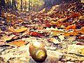 Autumn in Gërmia Park, Prishtinë, Kosova.jpg