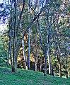 AwakeningTrees, Yucaipa, CA 3-13 (14922648818).jpg