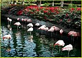 Balancing Act, Flamingos, Palm Desert 2-14 (12819637173).jpg