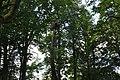 Baltā stārķa ligzda Nr.2992, Suntažu pagasts, Ogres novads, Latvia - panoramio.jpg