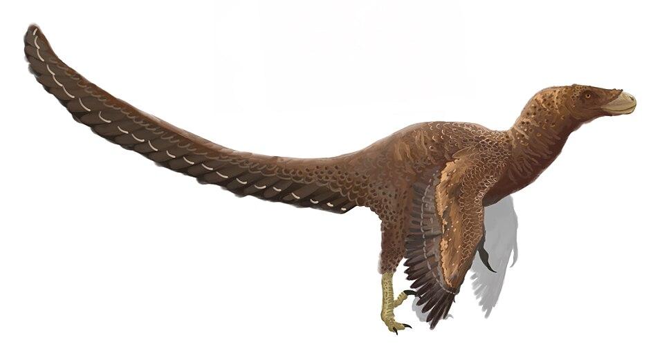 Bambiraptor reconstruction