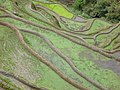 Banaue Viewpoint (3294297901).jpg