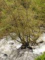 Banias-2003-70.jpg