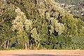 Bardonnex, Switzerland - panoramio (58).jpg