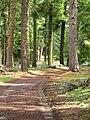 Barlow Road segment near Wamic Oregon.jpg