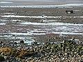 Beach near Bank Houses, Thurnham - geograph.org.uk - 1653727.jpg