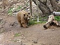 Bear (2379586763).jpg