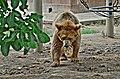 Bear in Lahore Zoo by Damn Cruze 2.jpg
