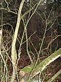 Beautiful branches.jpg