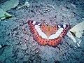 Beauty of a moth.jpg