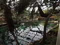 Beauval bassin des lamantins.jpg