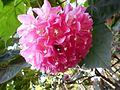 Bee having nectar from flower.jpg