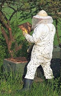 Beekeeper keeping bees.jpg