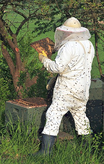 Beekeepers often wear protective clothing, for OHS reasons Beekeeper keeping bees.jpg